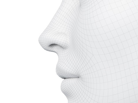 3d rendered medically accurate illustration of a wireframe nose