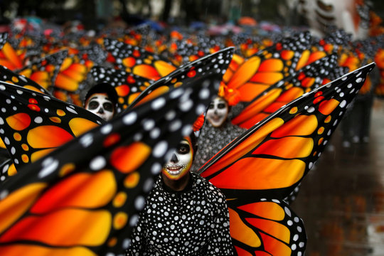 Participants dressed as Monarch butterflies perform during the annual Day of the Dead parade in Mexico City