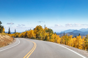 Wall Murals Pale violet Empty highway winding through a golden fall aspen forest in a Colorado mountain landscape