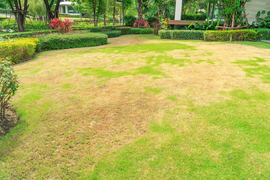 Pests and disease cause amount of damage to green lawns, lawn in bad condition and need maintaining, Landscaped Formal Garden, Front yard with garden design, Peaceful Garden, Path in the garden.