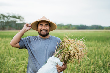portrait of happy asian farmer with paddy rice grain during harvesting