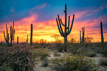 Foto op Aluminium Grijze traf. Dramatic Sunset in Arizona Desert: Colorful Sky and Cacti/ Saguaros in Foreground - Saguaro National Park, Arizona, USA