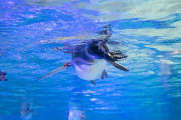 泳ぎ手 photos, royalty-free images, graphics, vectors & videos ...