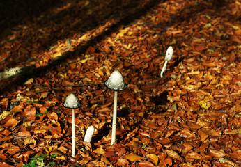 Pilze im Wald mit Laub