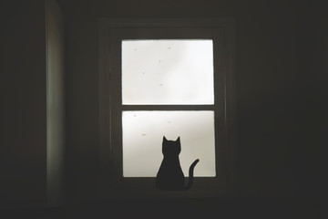 black cat looks out of the window at birds flying free in the sky