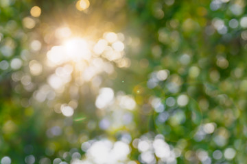 Abstract blurred natural background with sun spots.