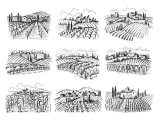 Vineyard landscape. Farm grape fields with houses agricultural hand drawn vector illustrations. Farm vineyard, landscape field agriculture