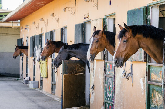 Horses in a stable, horizontal