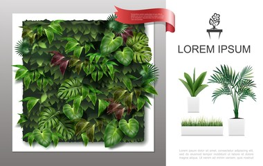Wall Mural - Realistic Home Plants Concept