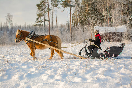 Woman driving with horse and sleigh