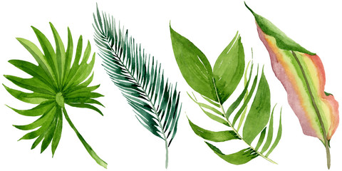 Palm beach tree leaves jungle botanical. Watercolor background illustration set. Isolated leaves illustration element.