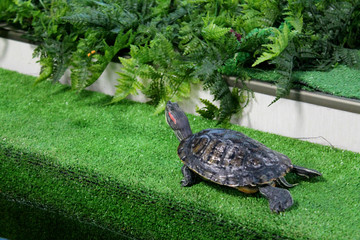 Picture of the turtle on the green grass background. Sea inhabitant near plant leaves