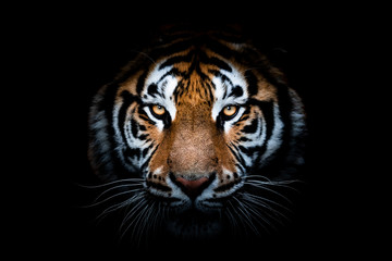 Poster de jardin Tigre Portrait of a Tiger with a black background
