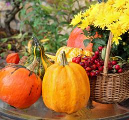 Halloween in the garden