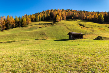 Wall Mural - Autumn mountain landscape with traditional alpine hut and larch trees. Austrian Alps, Tyrol, Austria.