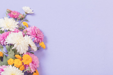 chrysanthemums on violet paper background