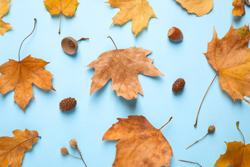 Flat lay composition with autumn leaves on blue background