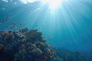 Life-giving sunlight underwater. Sun beams shinning underwater on the tropical coral reef. Ecosystem and environment conservatio
