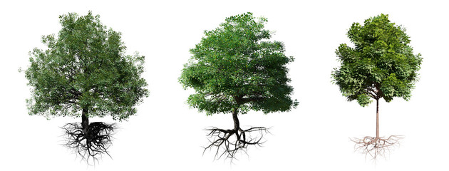 tree set with roots isolated on white background