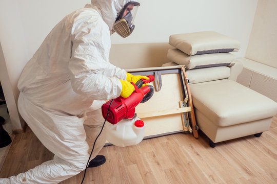 pest control worker in uniform spraying pesticides under couch in living lounge room