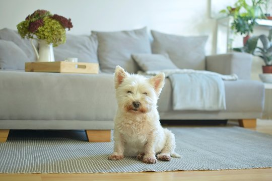 white dog in living room with autumn mood