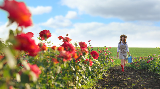 Woman with watering can walking near rose bushes outdoors. Gardening tool