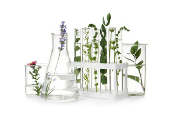 Fototapete - Test tubes and other laboratory glassware with different plants on white background