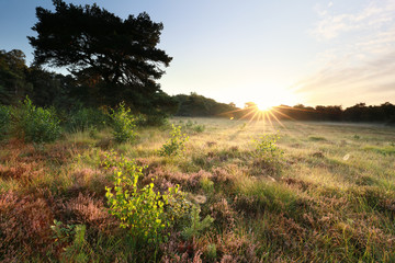 morning sunshine over wild meadow in forest