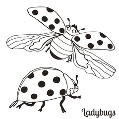 Illustration with crawls and flies lady bugs.