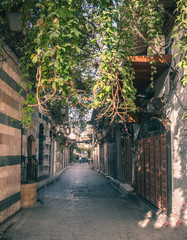 jasmine trees in one of the oldest lanes in Ancient City of Damascus (Syrian Arab Republic