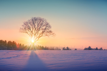Winter sunset over the snow covered tree.Nature background.