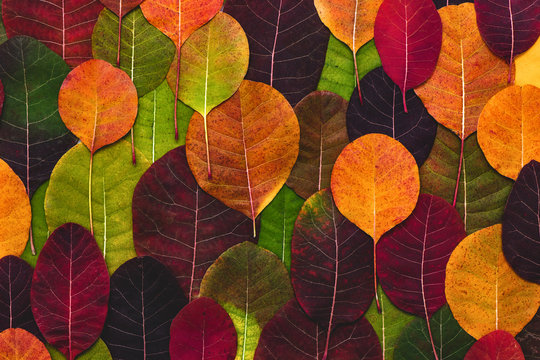 Colorful background made of fallen autumn leaves.