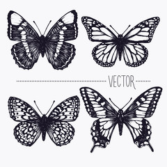 Tuinposter Vlinders in Grunge Vector hand drawn ink illustration. Tropical butterflies. Isolated clip art . Graphic design image for decoration. Engraving style, old fashioned, vintage picture. Nature objects. Entomology. Sketch