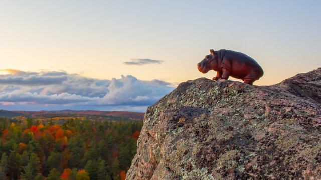 A Hippopotamus Toy Looks Out Over the Forest