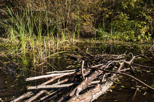 bunch of fallen tree trunks and branches floating in the pond in the park surrounded by tall green grasses under the sun