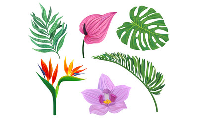 Tropical Plants Vector Illustrated Set. Different Exotic Flora