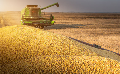 Combine harvester harvesting soybean at field.