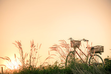 Photo sur Toile Velo Retro bicycle in fall season grass field, warm meadow tone