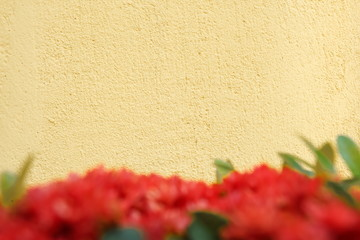 Beige color background with red flower foreground.