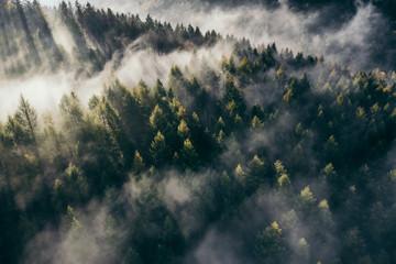 Der Teutoburger Wald im Nebel Wall mural