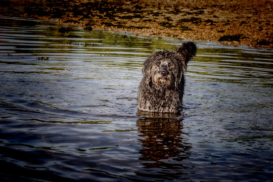 Dog standing in shallow water