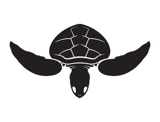 Graphic isolate sea turtle, vector