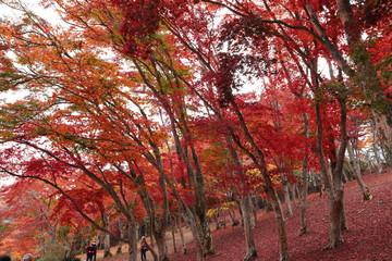 Recess Fitting Magenta 紅葉の風景