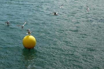 Gulls are enjoying flying at a yellow drifting buoy at a lake