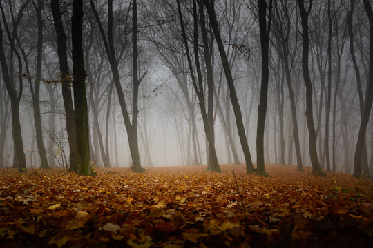 A mysterious and quiet day in the forest with fog. Autumn weather, damp and low temperature. Fairy or horror wallpaper.