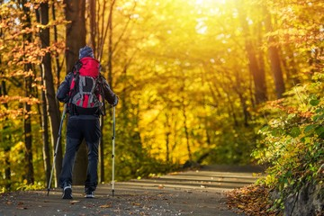 Fototapete - Fall Time Forest Trekking