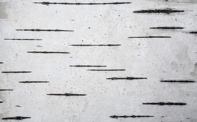 Natural background based on birch bark. Birch bark texture