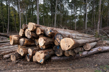 rons d'arbres coupés en forêt