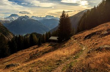 Wanderweg im herbstlichen Alpenwald (Rhonetal) mit goldenem Licht / Hiking path in alps (rhone valley) in autumn