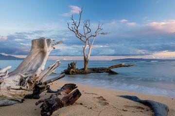 Fototapeta Scenic Maui beach with  driftwood and a dry tree obraz